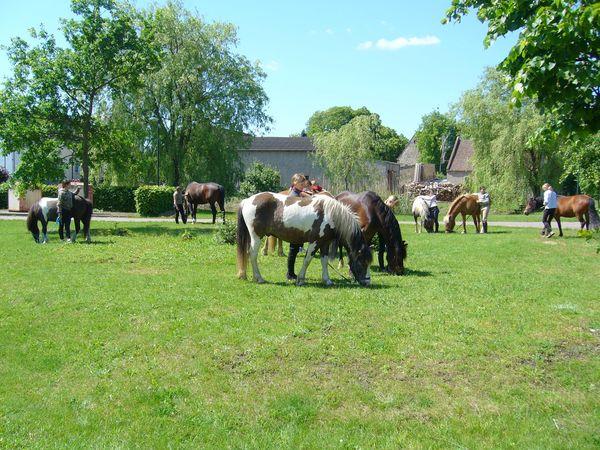 Ponyfarm Bendix, Foto: Anne-Kathrin Bendix