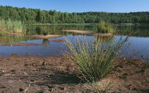 Binse im Naturpark Dahme-Heideseen (c) Archiv LUGV