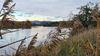 Die Donau bei Pfatter