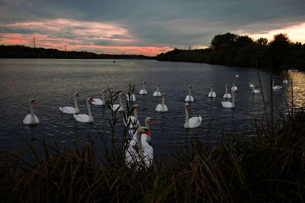 Sonnenuntergang an der Donau im Landkreis Straubing-Bogen