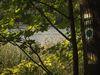 Herrensee, Foto: Christoph Creutzburg, Lizenz: Seenland Oder-Spree