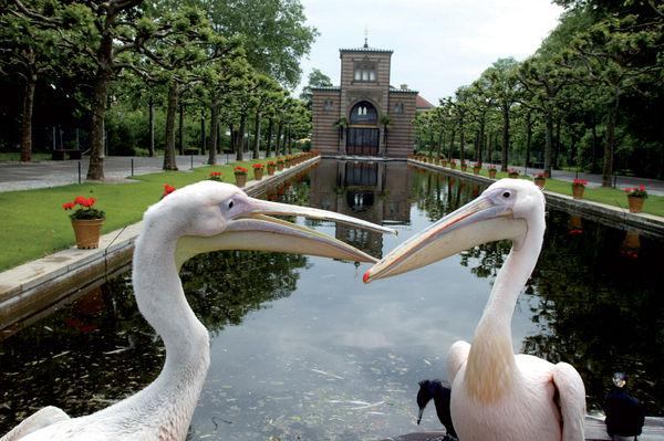 Wilhelma: Damaszenerhalle und Langer See