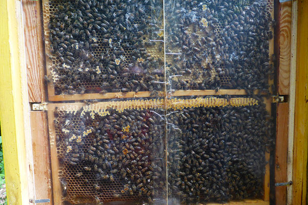 Oberpfälzer Bienenlehrpfad