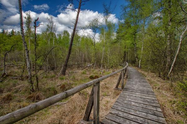 Der drei km lange Moorlehrpfad ermöglicht Naturfreunden in diese schützenswerte Welt einzutauchen