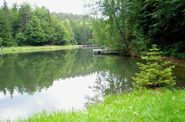 Blick auf den Buchwiesweiher bei Thurmansbang im Ilztal und Dreiburgenland