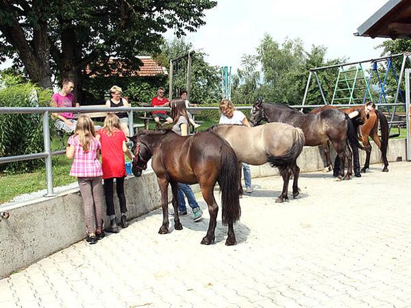 Pferde auf dem Ferienhof Schiermeier in Kelchham bei Thyrnau