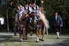 Herrlich geschmückte Pferde beim Leonhardi-Umritt in Kellberg im Passauer Land