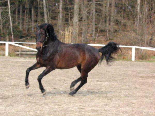 Prächtiges Pferd beim Reiterhof Anetseder auf Gut Aichet bei Thyrnau