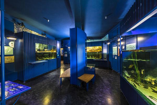 """Im MuseumsQuartier befindet sich auch die """"Abteilung Fisch"""", das Oberpfälzer Fischereimuseum"""
