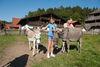 Tiere im Museumsdorf Bayerischer Wald, Tittling