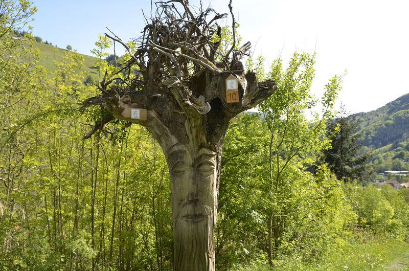 Walderlebnispfad Todtnau