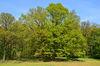 Trebnitzer Schlosspark, Foto: Franziska Mandel