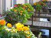 Blumenschmuck in der Ammergasse