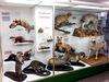 Zoologische Schausammlung der Universität Tübingen