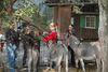 Ponys auf dem Haustierhof Reutemühle in Überlingen
