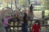 Ponys und Pferde auf dem Haustierhof Reutemühle in Überlingen