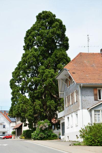 site de rencontre maritime laufenburg