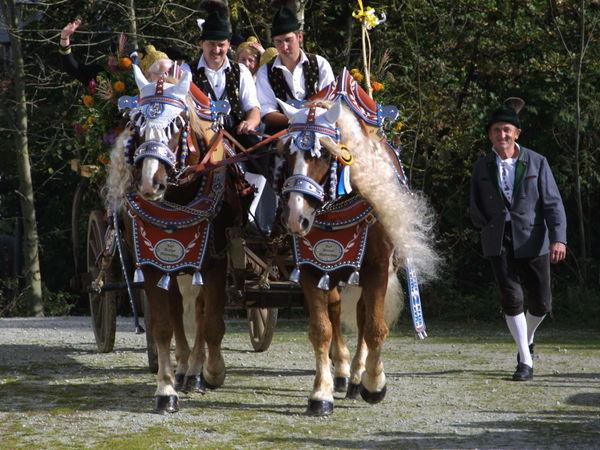 Kultur und Tradition beim Leonhardi-Umritt in Kellberg in den Donau-Perlen im Passauer Land