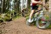 Mountainbike-Tour mit Bayerwald Bike durch den Bayerischen Wald