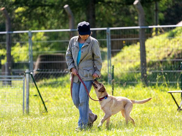 Hundetraining im KNAUS Campingpark in Viechtach