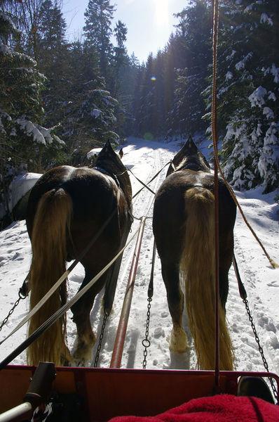 Schlittenfahrten durch den verschneiten Bayerischen Wald