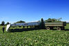 Das größte Gurkenanbaugebiet Europas liegt im Ferienland Dingolfing-Landau