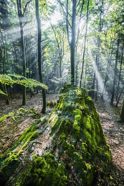 Die Basaltpferdchen im Naturpark Steinwald