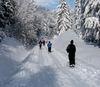 Traumhaftes Wintererlebnis auf der Adalbert-Stifter-Loipe