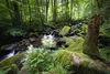 Wildromantisches Naturschutzgebiet Saußbachklamm bei Waldkirchen im Bayerischen Wald