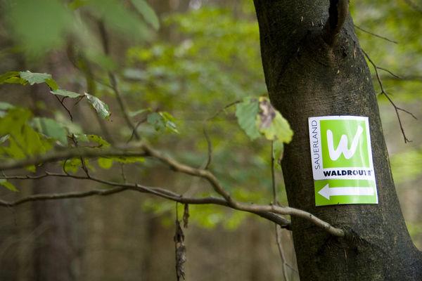 Schild Waldroute