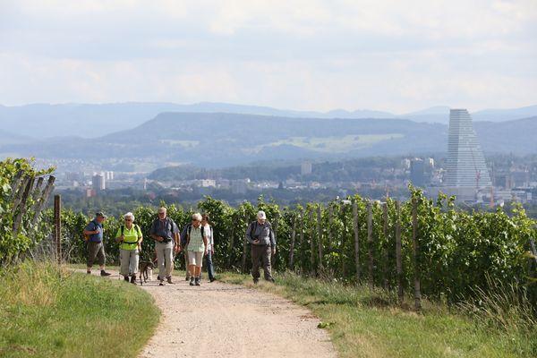 Weinweg-Wandergruppe