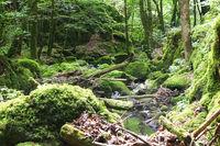 Entlang des Haselbach-Wasserfall