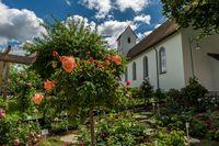 Duft Rosen Garten