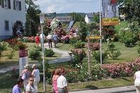 Rosen Sortiments Garten Nöggenschwiel