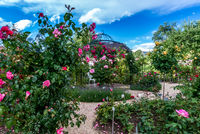 Rosen Duft Garten