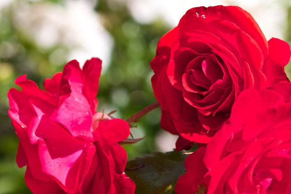 Herrliche Blütenpracht wohin das Auge reicht