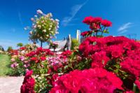 Rosen-Sortiments Garten