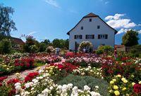 Rosen-Sortiments-Garten