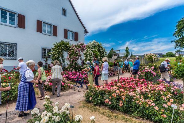 Rosen-Sortiments-Garten Nöggenschwiel