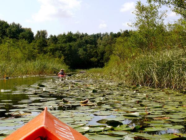Seerosentour auf dem Glubigsee