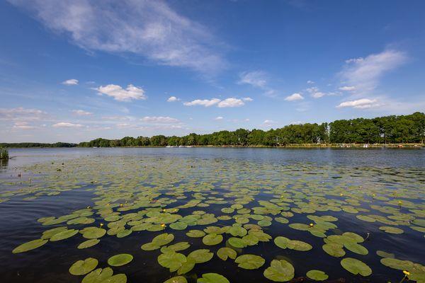 Seerosentour, Foto: Seenland Oder-Spree/Florian Läufer