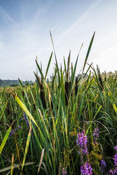 Botanische Vielfalt in der Muckenthaler Teichpfanne im Oberpfälzer Wald.