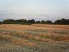 Abendstimmung über den Feldern, Foto: S. Rückheim
