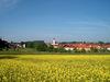 Blick über eine blühende Rapswiese auf Wiesenfelden
