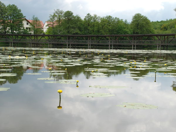 Blick über den Weiher zum Naturbeobachtungssteg in Wiesenfelden