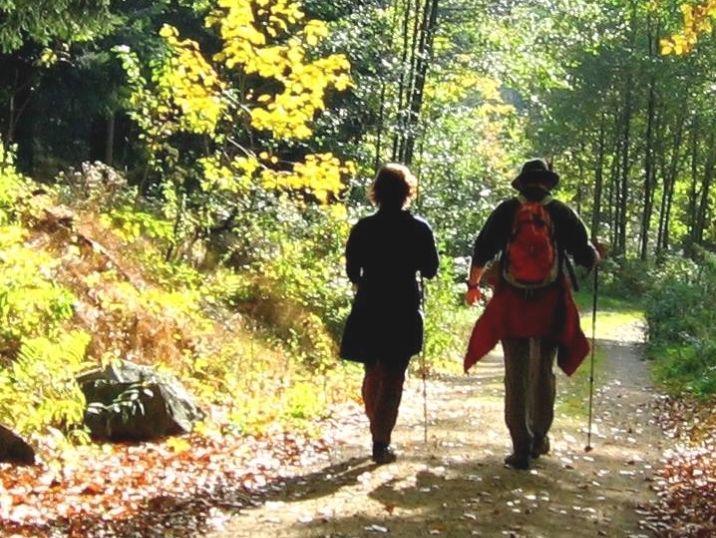 Wandererlebnis Rund ums Brandmoos bei Wiesenfelden im Vorderen Bayerischen Wald