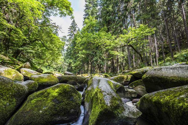Naturschutzgebiet Waldnaabtal im Oberpfälzer Wald.