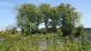 Traumhafte Natur: die Donauinsel bei Windorf