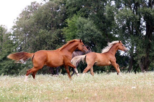 Pferde im Seenland Oder-Spree, Foto: Katrin Riegel