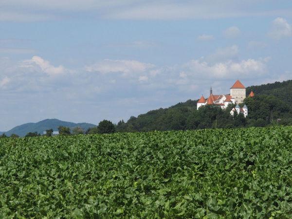 Blick auf das Schloss in Wörth an der Donau
